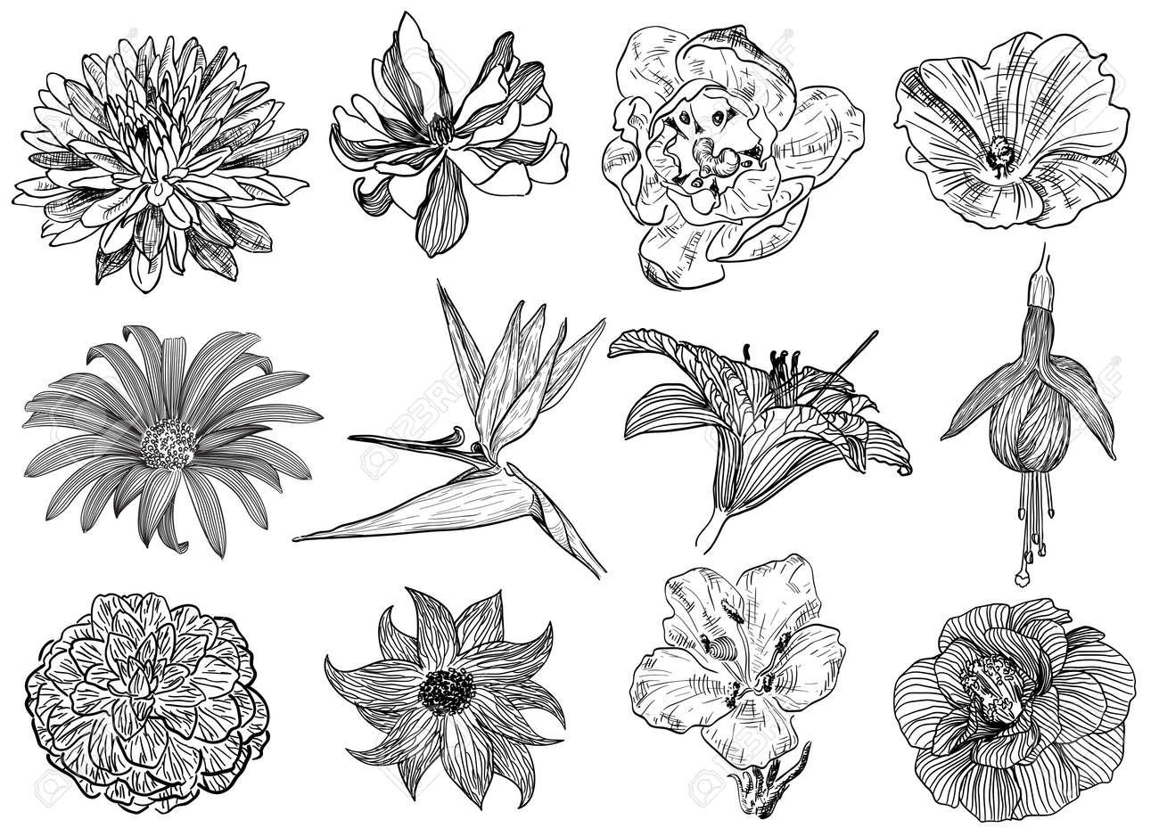 Ilustración Del Vector De Las Flores En El Estilo De Dibujo Aster Magnolia Enredadera Manzanilla Ave Del Paraíso De Flores Fucsia Lirio