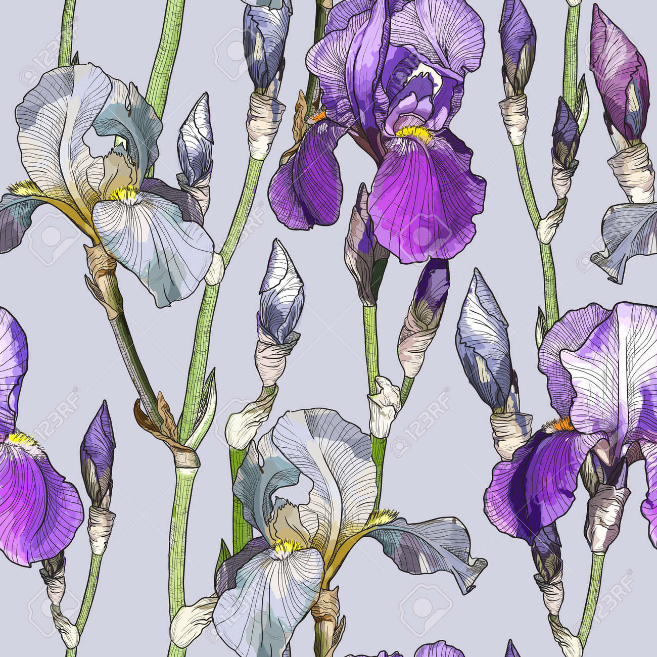 Vector Seamless Pattern With Beautiful Iris Flowers Royalty Free