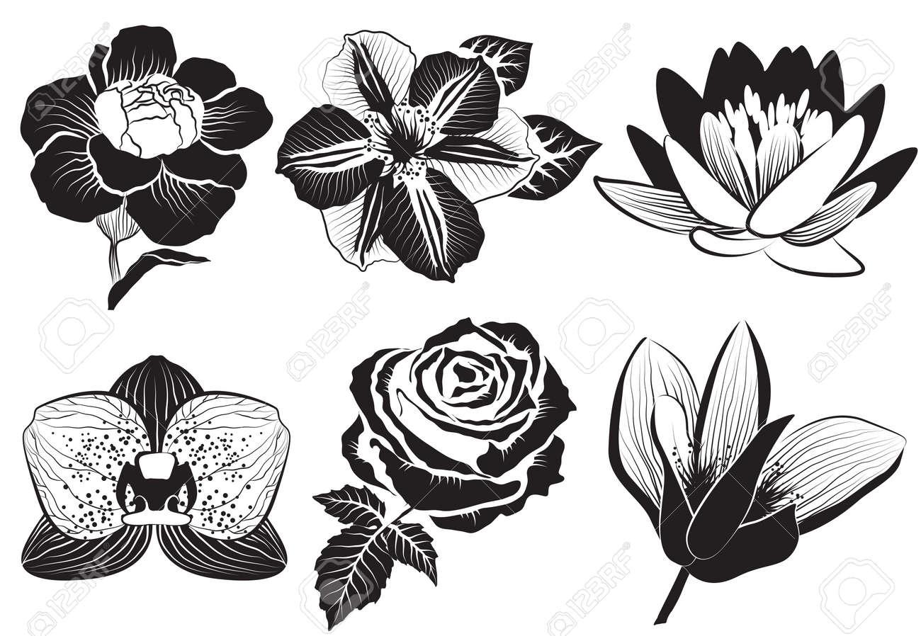 Flores En El Estilo De Dibujo Color De Rosa Clematis Orquídea