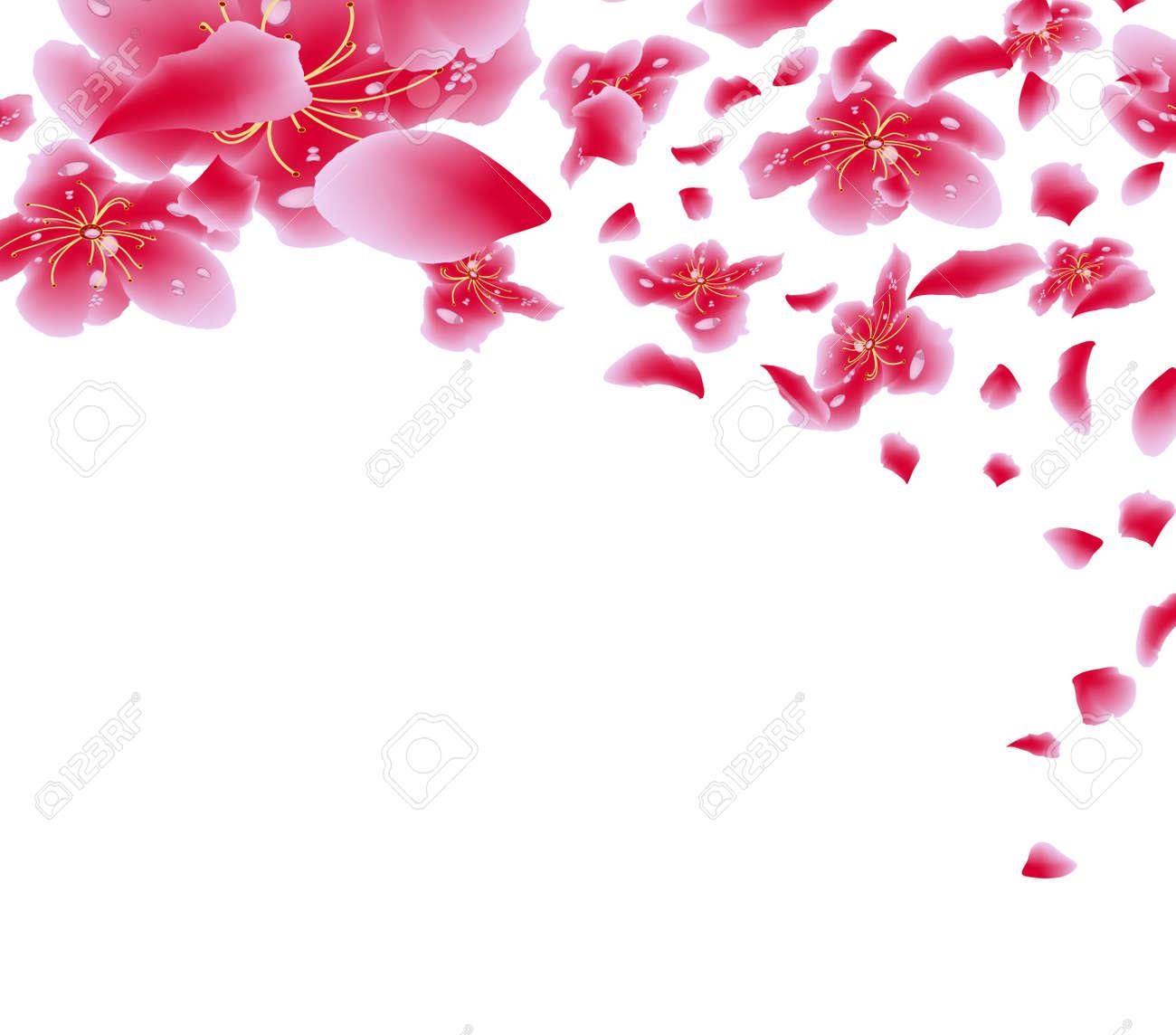 Sakura Flowers Background Cherry Blossom Isolated White Chinese New Year Stock Vector