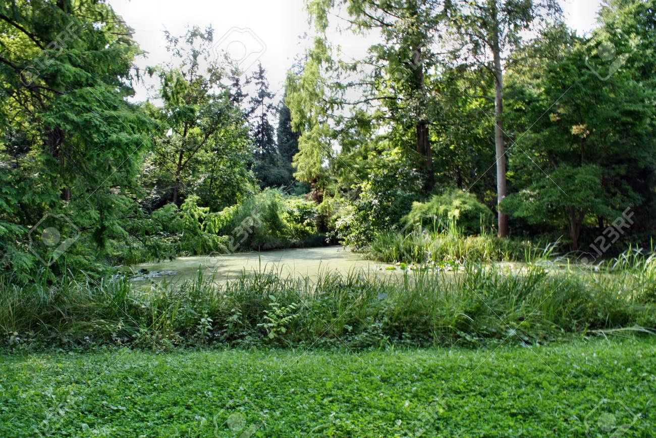 公園の池の藻 ロイヤリティーフ...