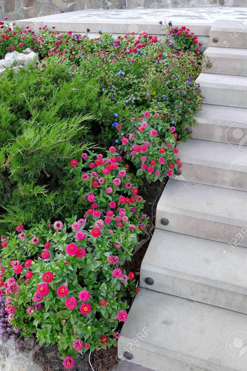 Decorative Flower Bed With Evergreen Plants And Small Claret