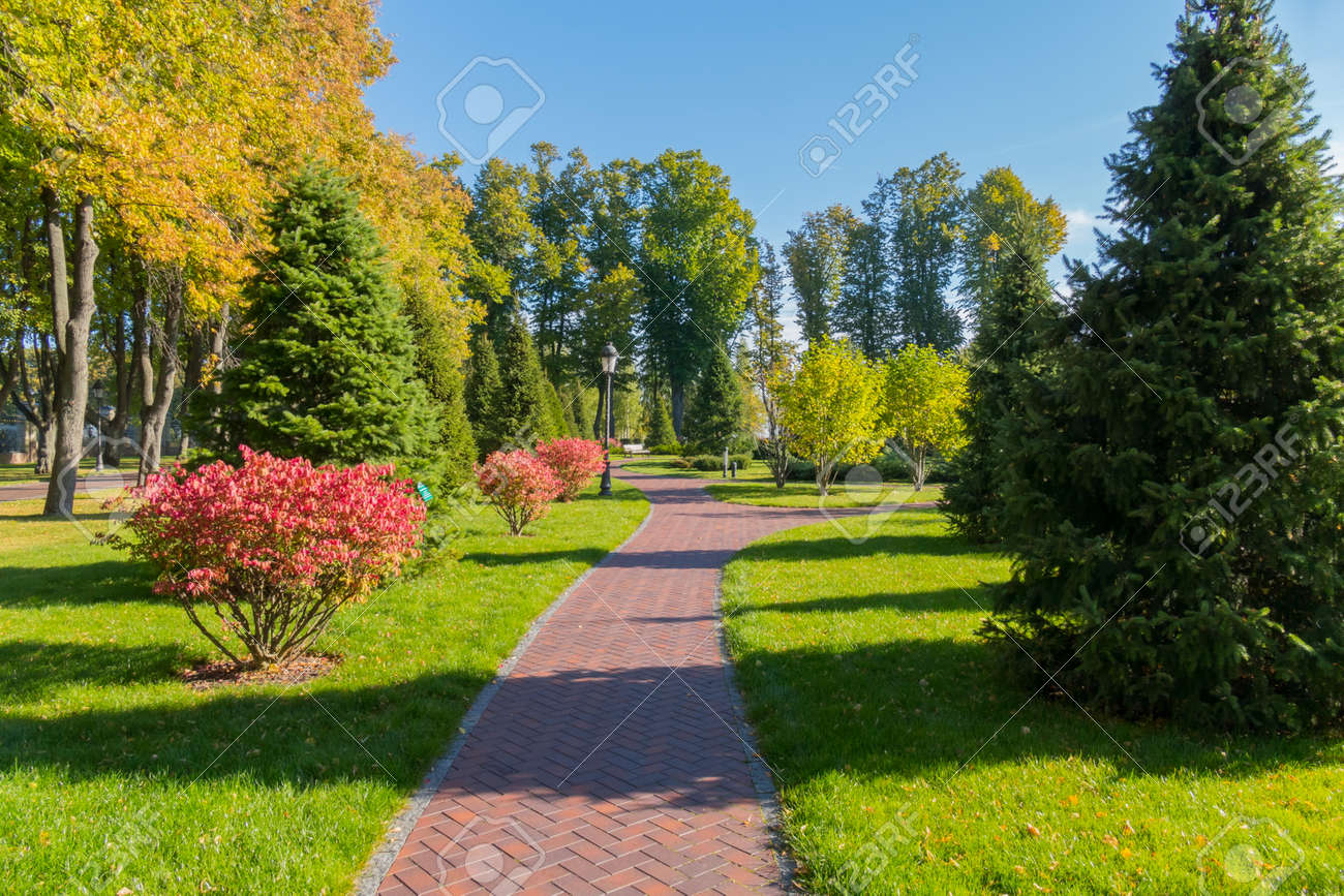 High coniferous trees and beautiful small shrubs with pink flowers high coniferous trees and beautiful small shrubs with pink flowers on either side of the promenade mightylinksfo