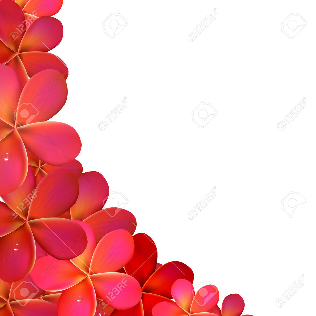 Frangipani Frame With Water Drops Stock Vector - 15710665