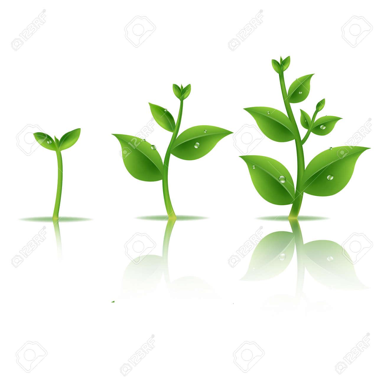 Plant Set With Gradient Mesh, Vector Illustration - 37192045