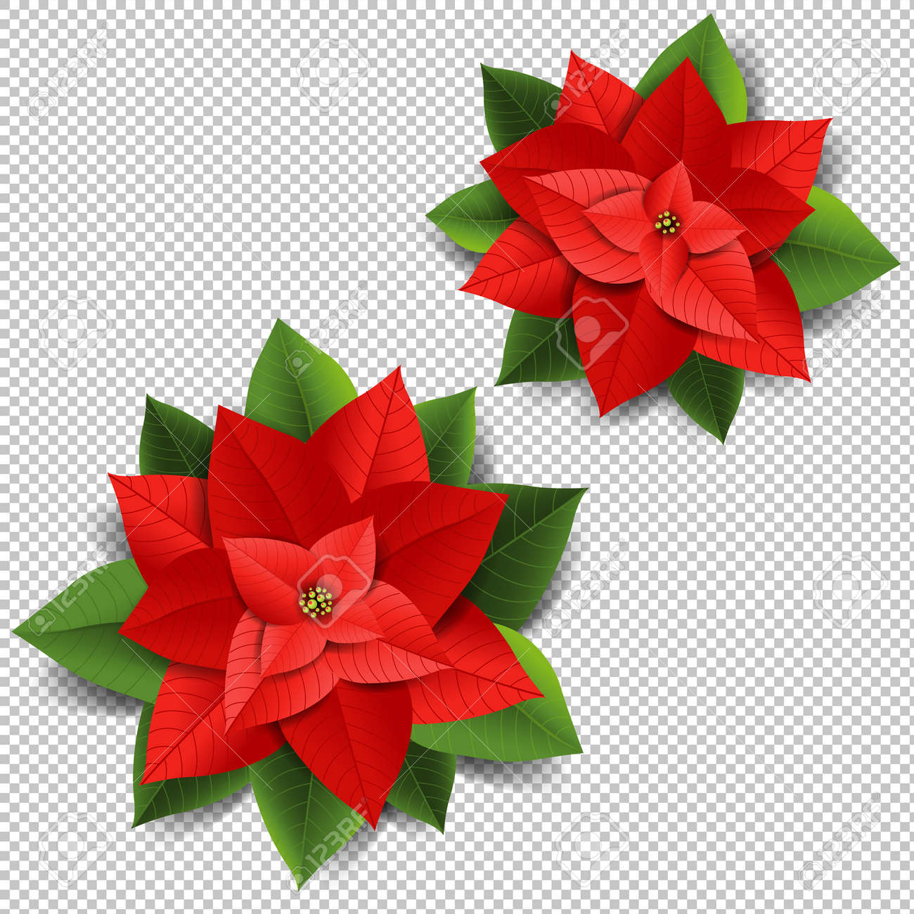 Christmas poinsettia isolated transparent background with gradient christmas poinsettia isolated transparent background with gradient mesh vector illustration stock vector 90935488 mightylinksfo