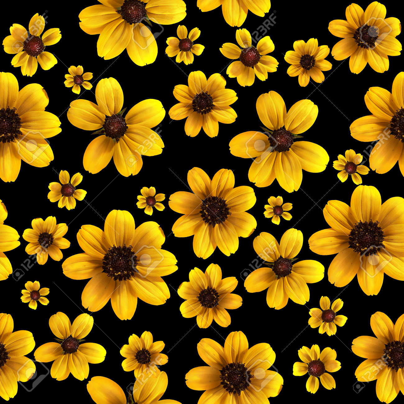 Images Of Yellow Flowers With Black Background Shareimages
