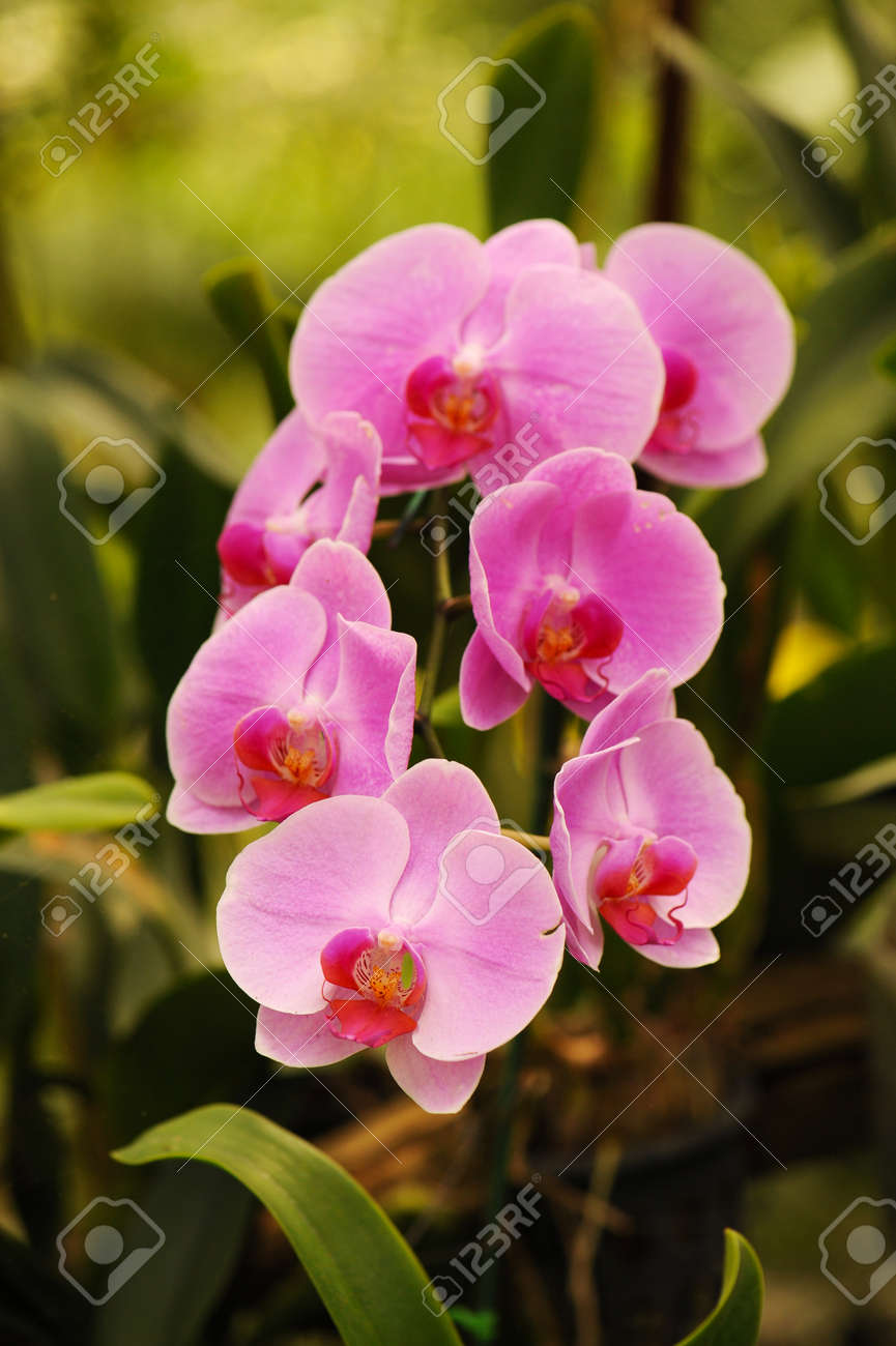Beautiful orchid flowers with soft focus and blur background stock beautiful orchid flowers with soft focus and blur background stock photo 64903240 izmirmasajfo