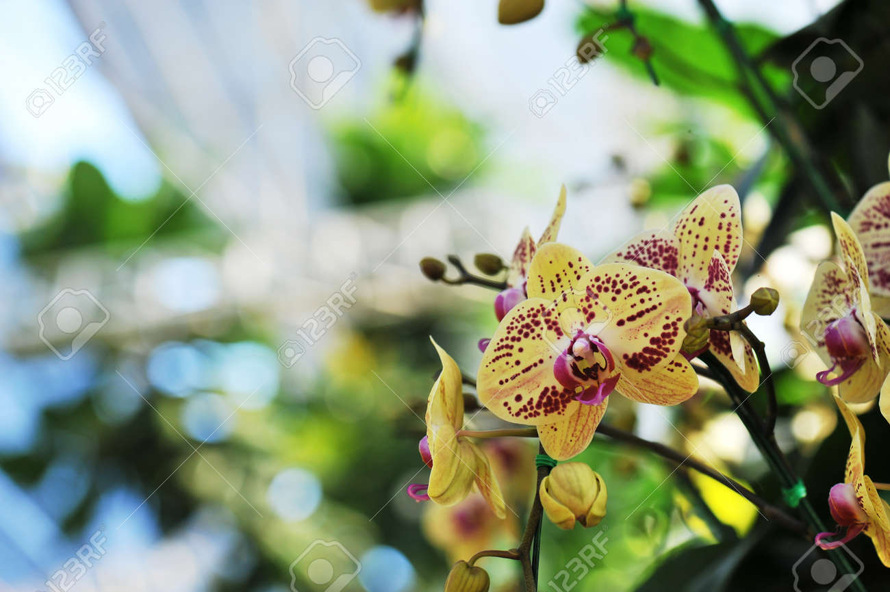 Beautiful Orchid Is Queen Of Flowers Stock Photo Picture And