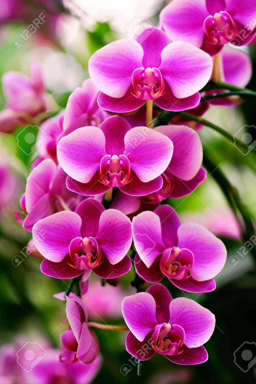 Belle Fleur D Orchidee Rose En Hiver Banque D Images Et Photos