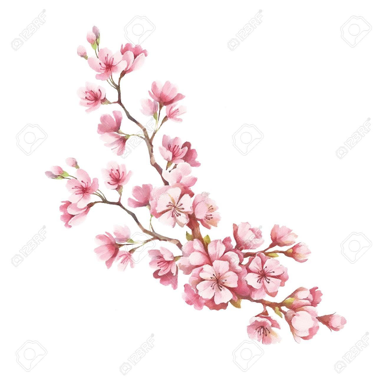 Rama De Flores De Cerezo Mano Dibujar La Ilustración Acuarela
