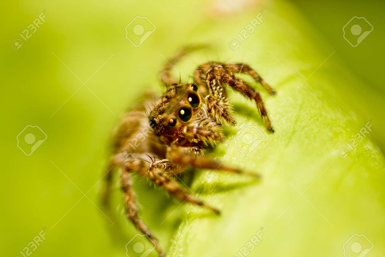 spider Stock Photo - 17122060