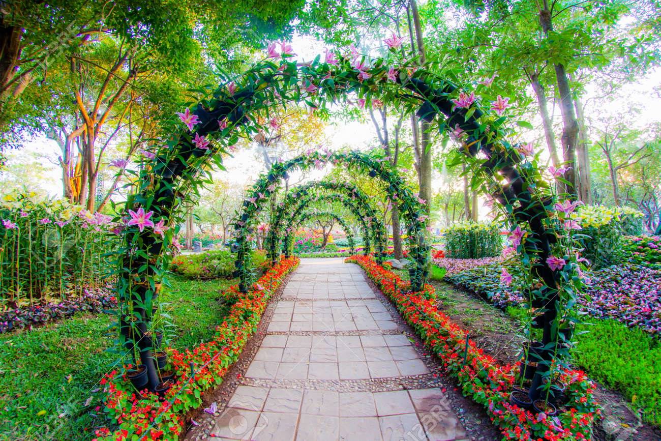 Beautiful flower arches with walkway in ornamental plants garden beautiful flower arches with walkway in ornamental plants garden 38729941 voltagebd Gallery
