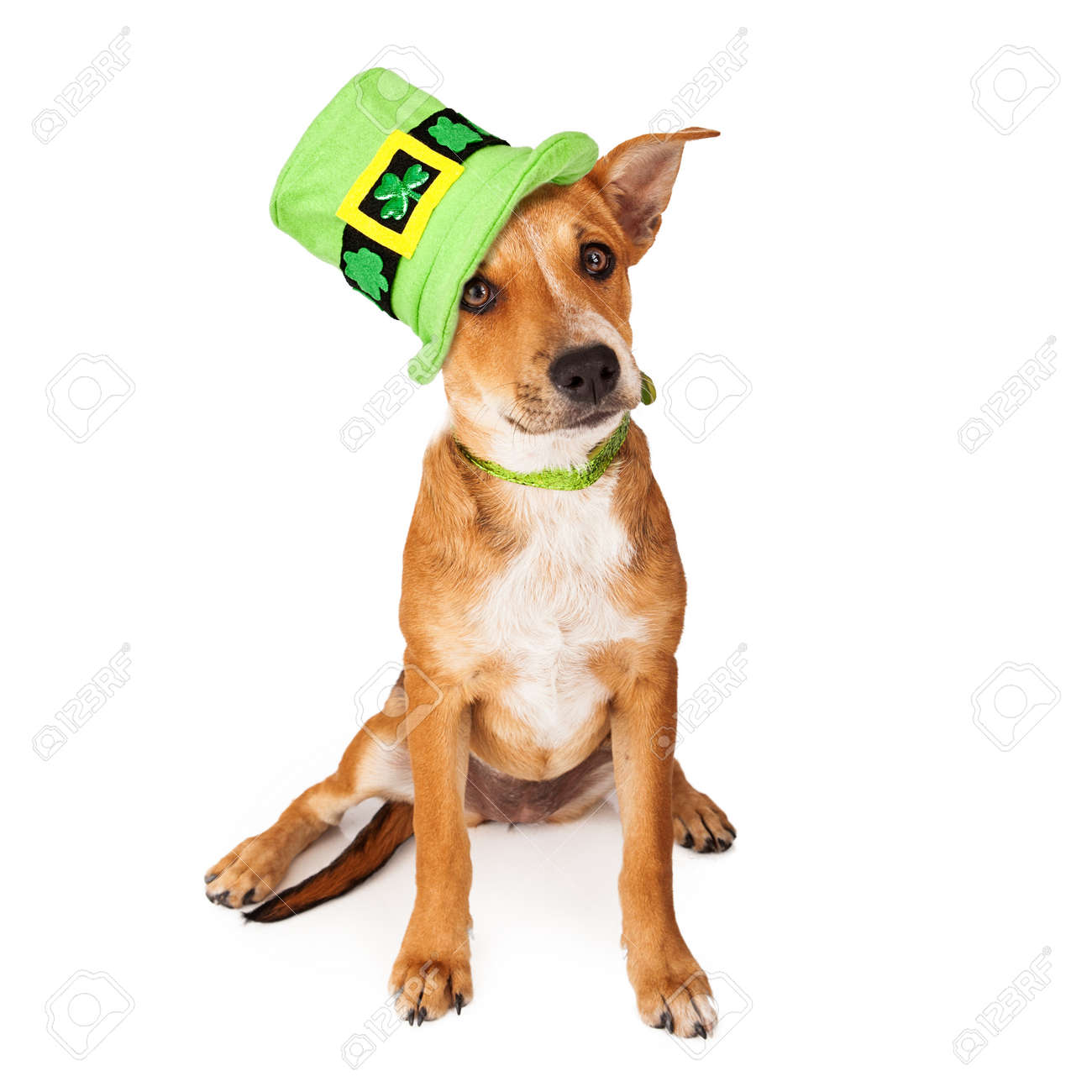 a cute young mixed breed puppy dog wearing a green collar and a cute young mixed breed puppy dog wearing a green collar and tall st patrick s