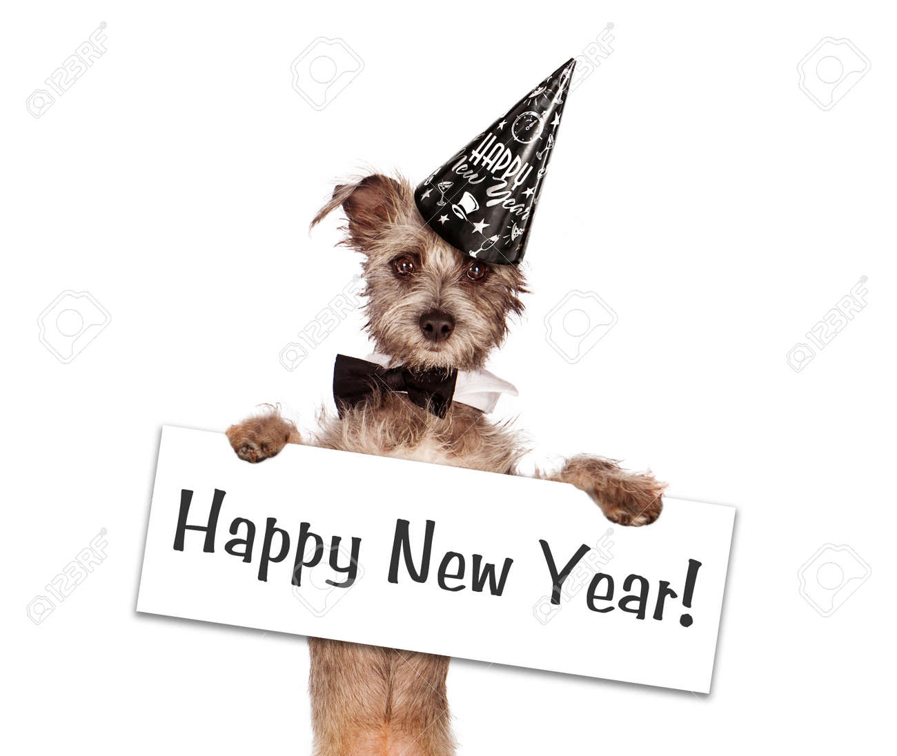 happy new year sign a cute young terrier mixed breed puppy dog against a white backdrop wearing a party hat