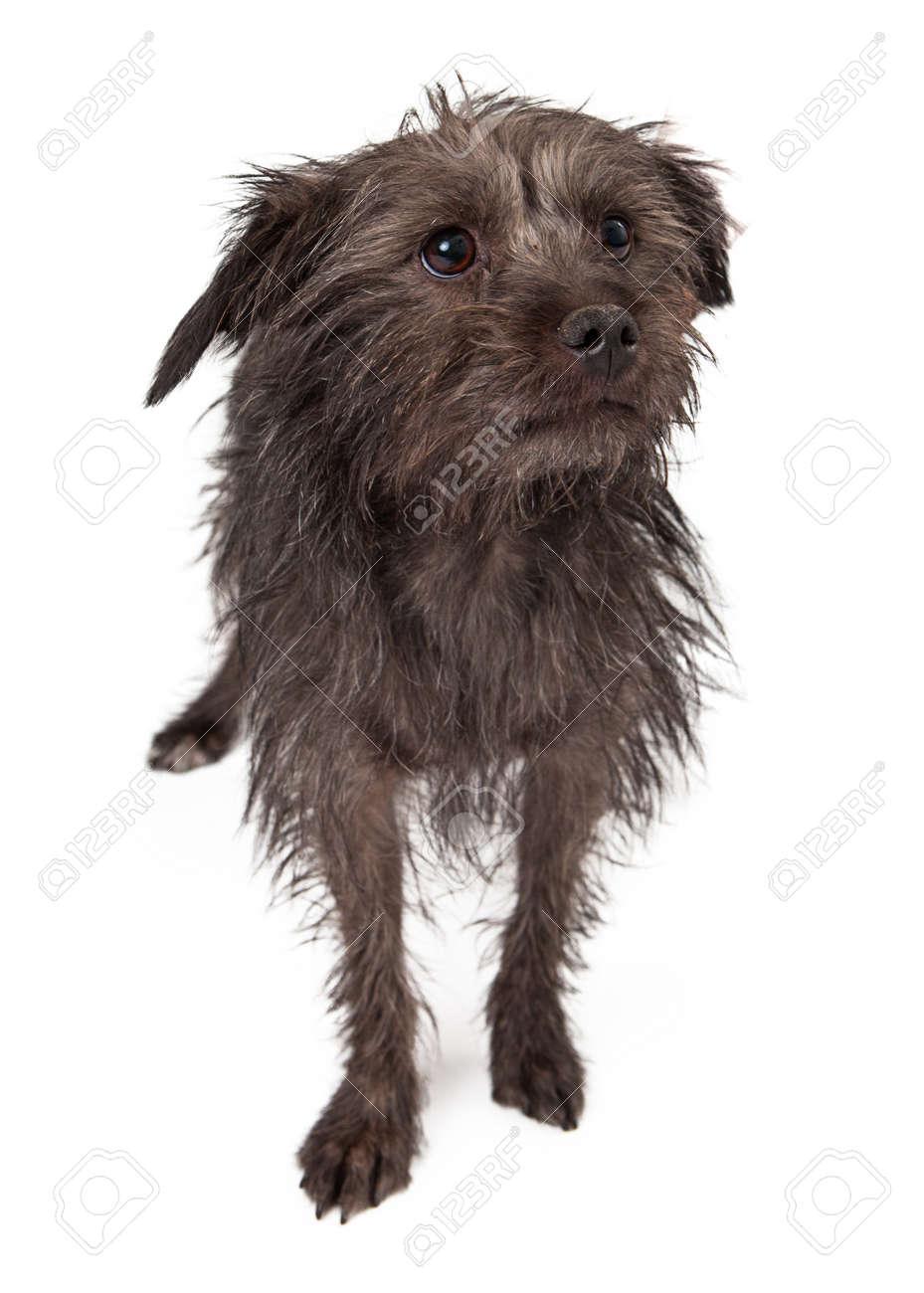 Nett Haar Terrier Mix Rasse Galerie - Die Besten Elektrischen ...