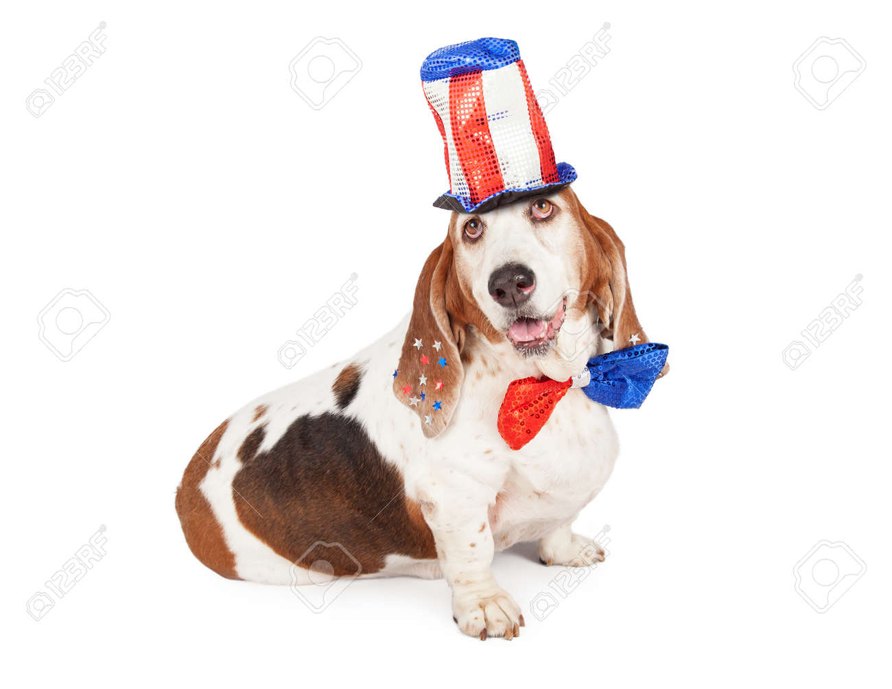 458474fabaef A cute and happy Basset Hound dog wearing a red, white and blue tall sequin