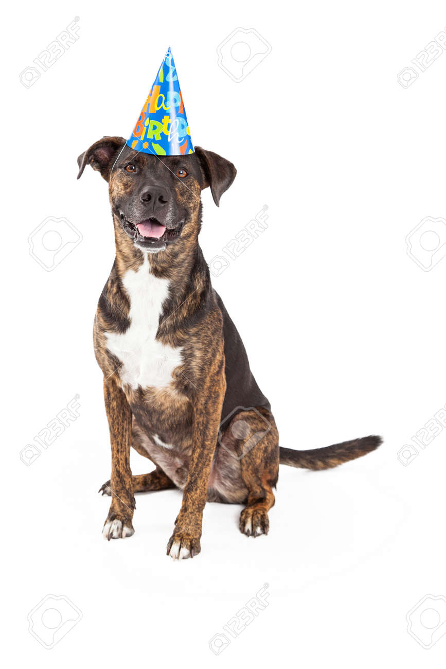 A Happy And Friendly Dog Wearing Birthday Hat While Sitting Looking Forward With