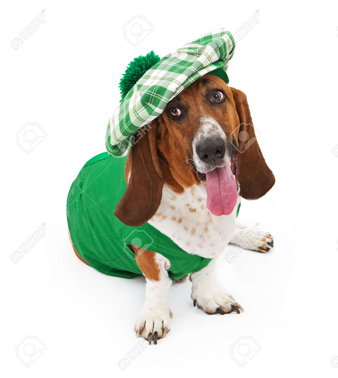 A Funny Basset Hound Dog Dressed For St Patrick S Day With A Stock Photo Picture And Royalty Free Image Image 36094085