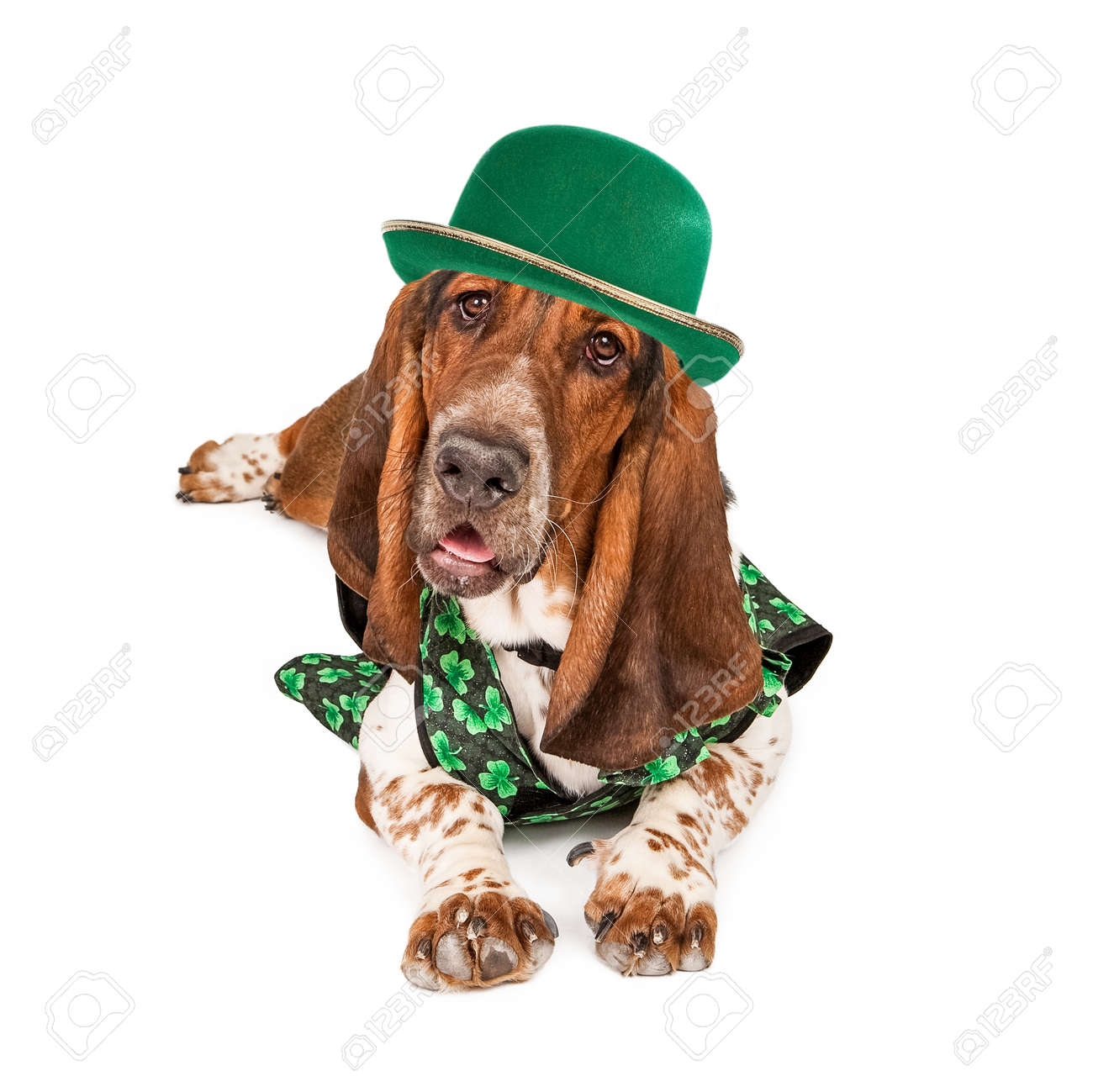 A Funny Photo Of A Basset Hound Dog Wearing An Irish St Patrick S Stock Photo Picture And Royalty Free Image Image 36094091