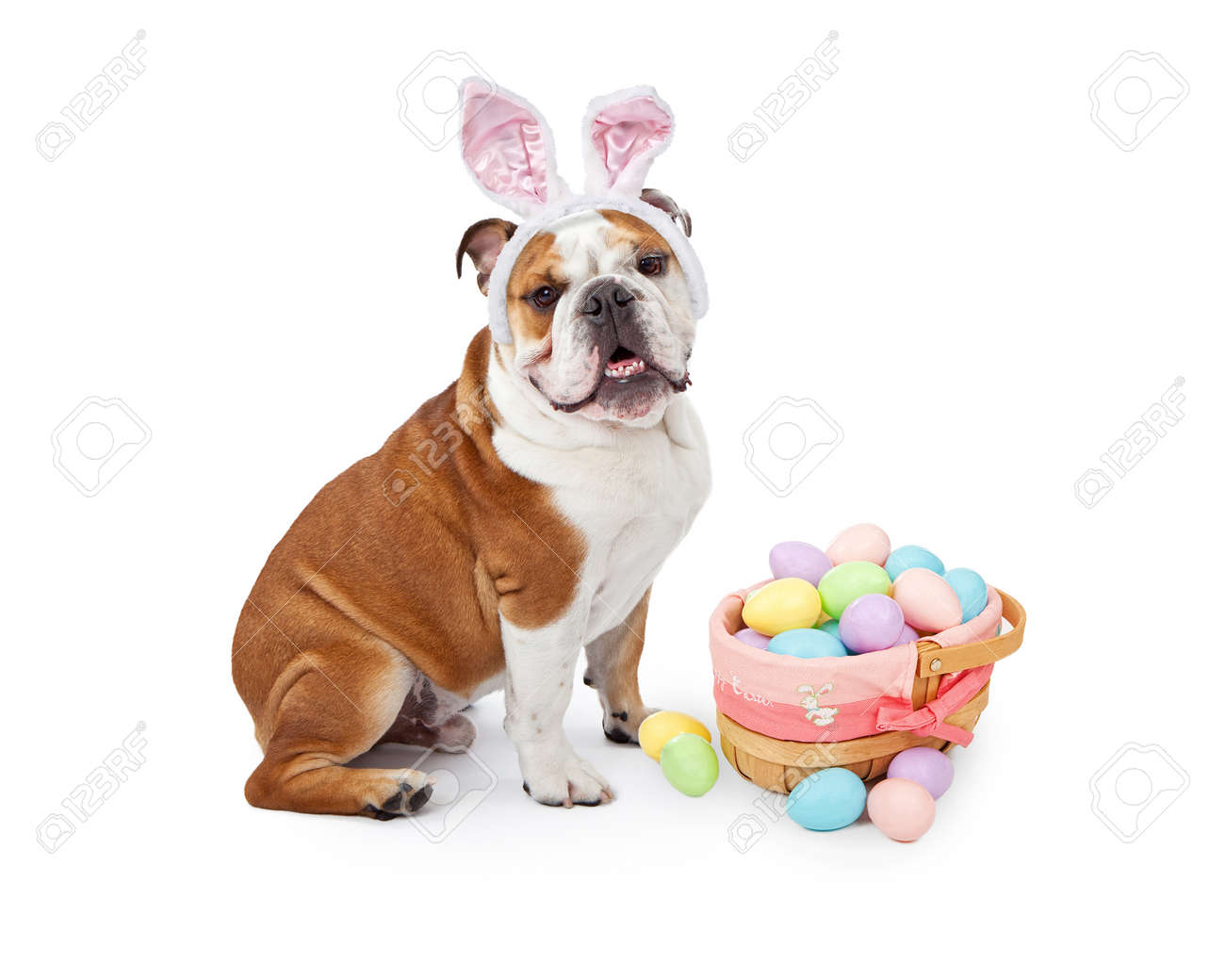 bunny stock photos u0026 pictures royalty free bunny images and stock
