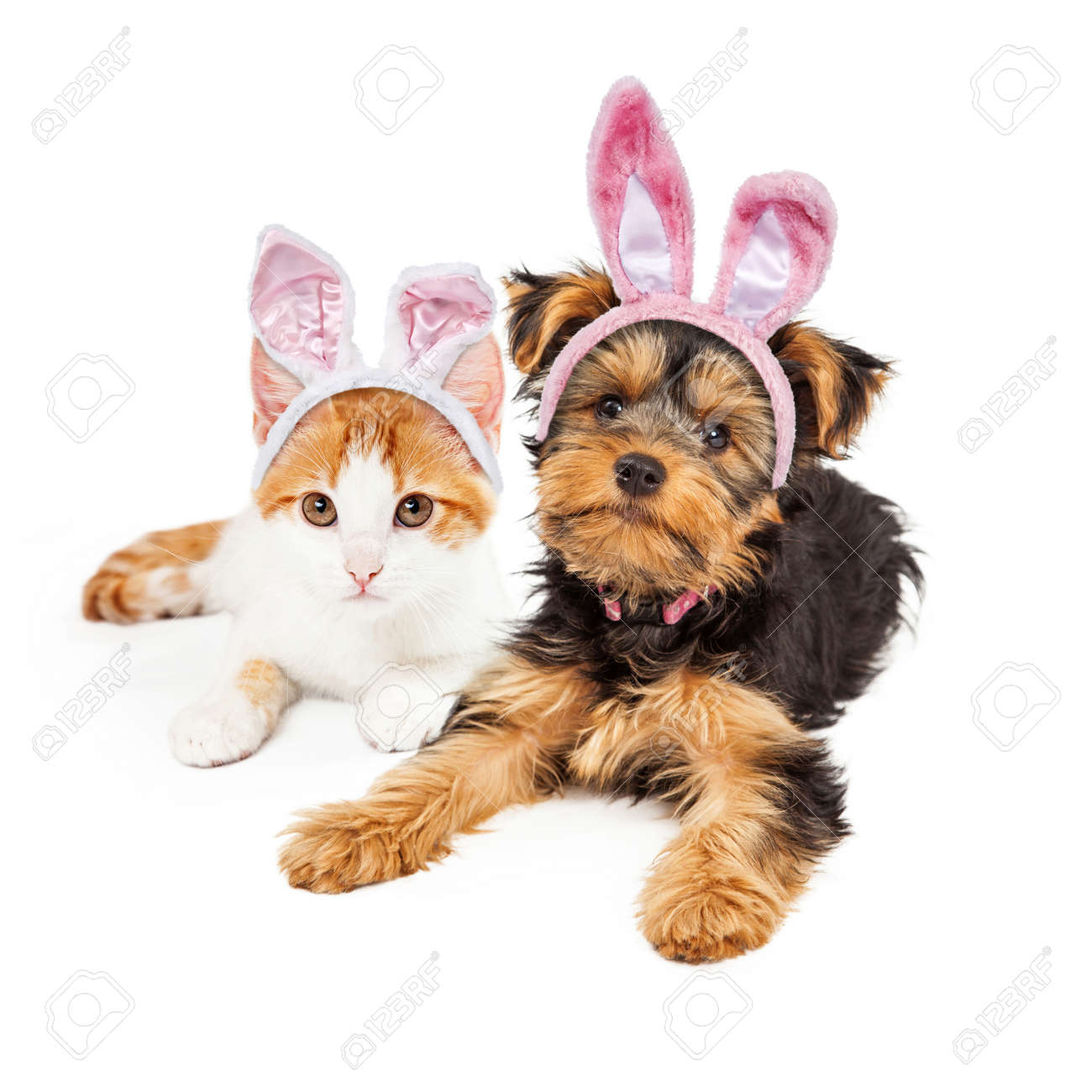 cute puppy and kitten laying together wearing pink easter bunny