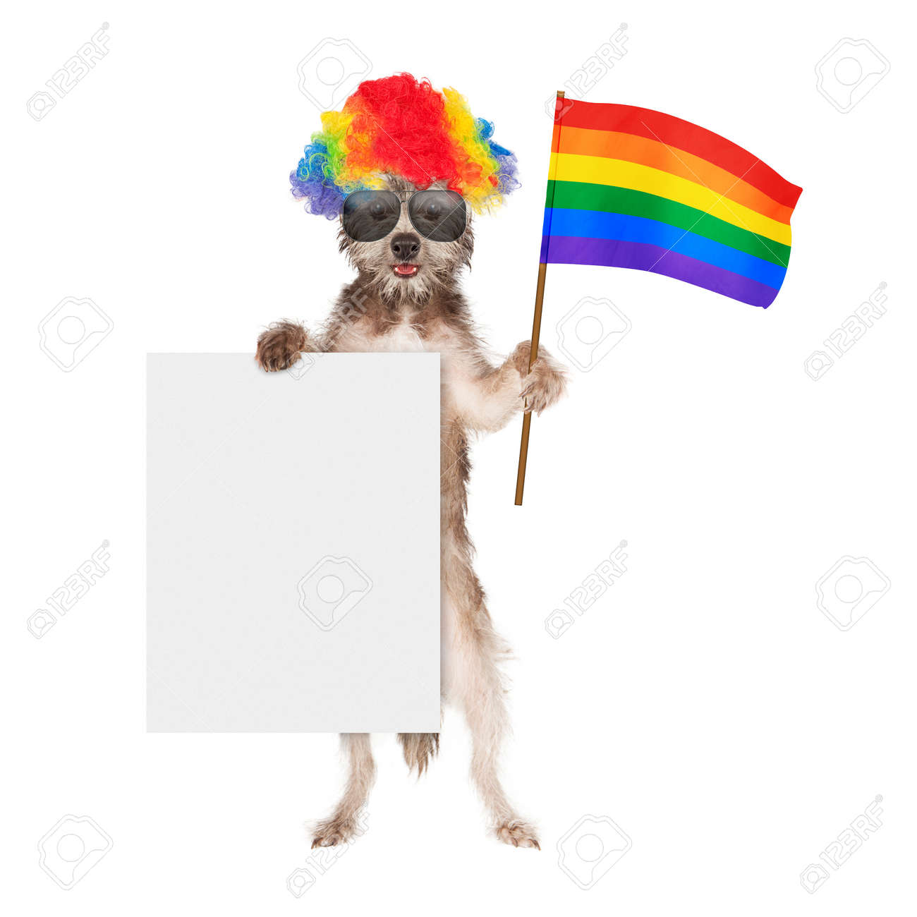 funny dog dressed for a gay pride parade wearing a rainbow color wig and sunglasses while - Blank Rainbow To Color