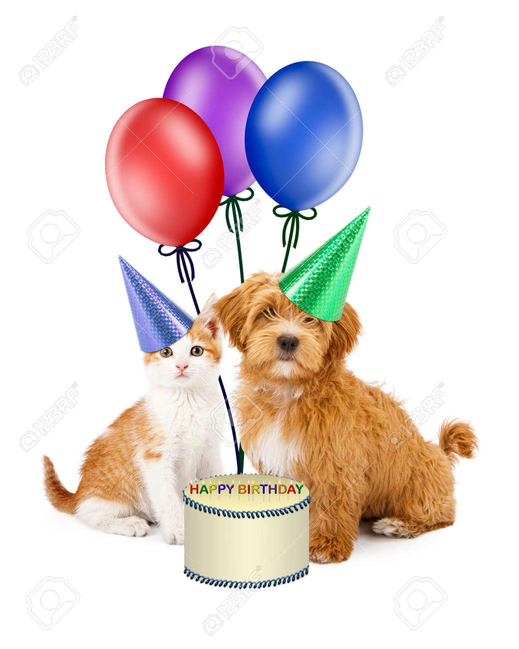Kittens Wearing Party Hats Kitten Wearing Party Hats