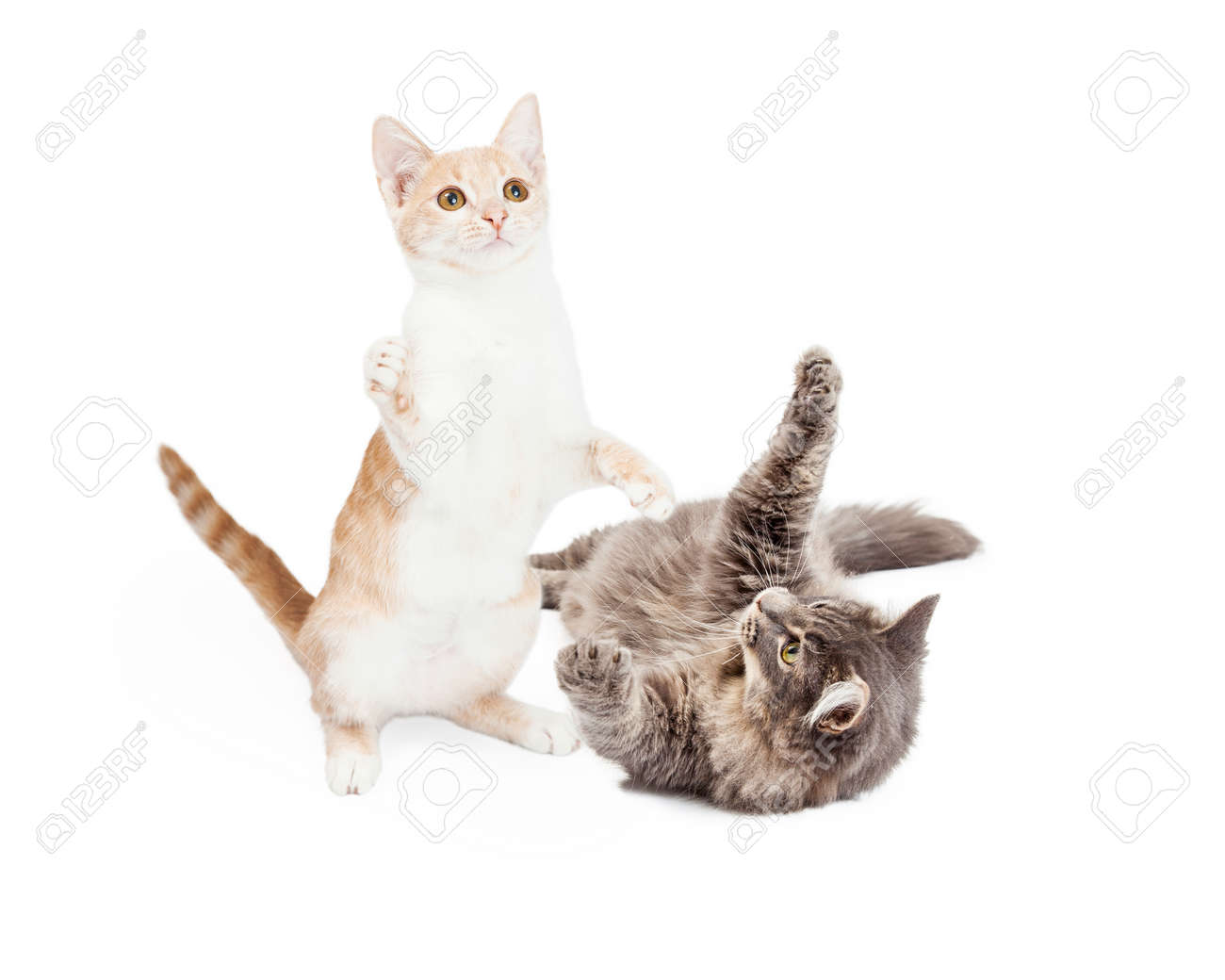 two playful little kittens rolling around together stock photo