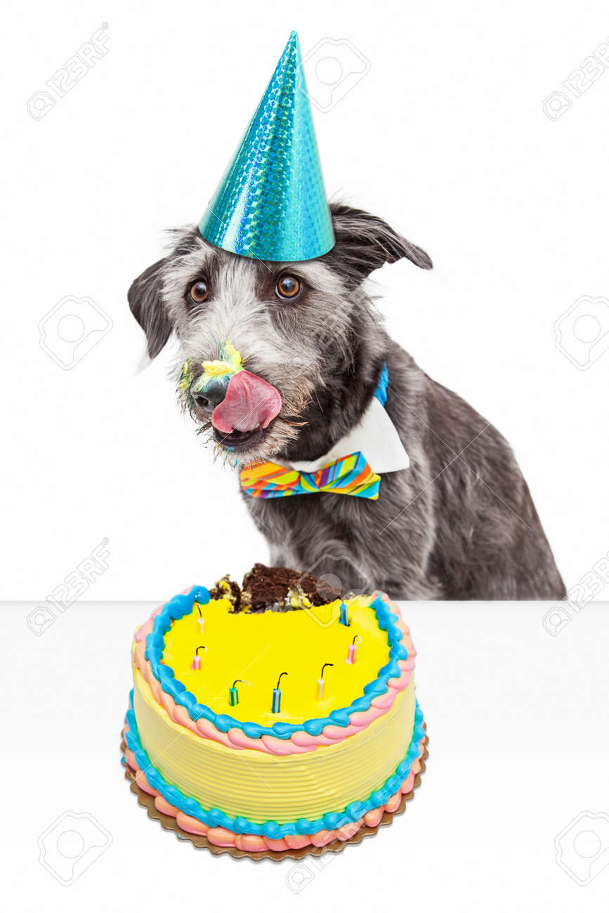 Funny Photo Of A Messy Dog Eating Birthday Cake And Licking Frosting