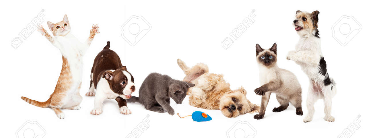 A Large Group Of Young Cats And Dogs Playing Together Image Stock Photo Picture And Royalty Free Image Image 41404082