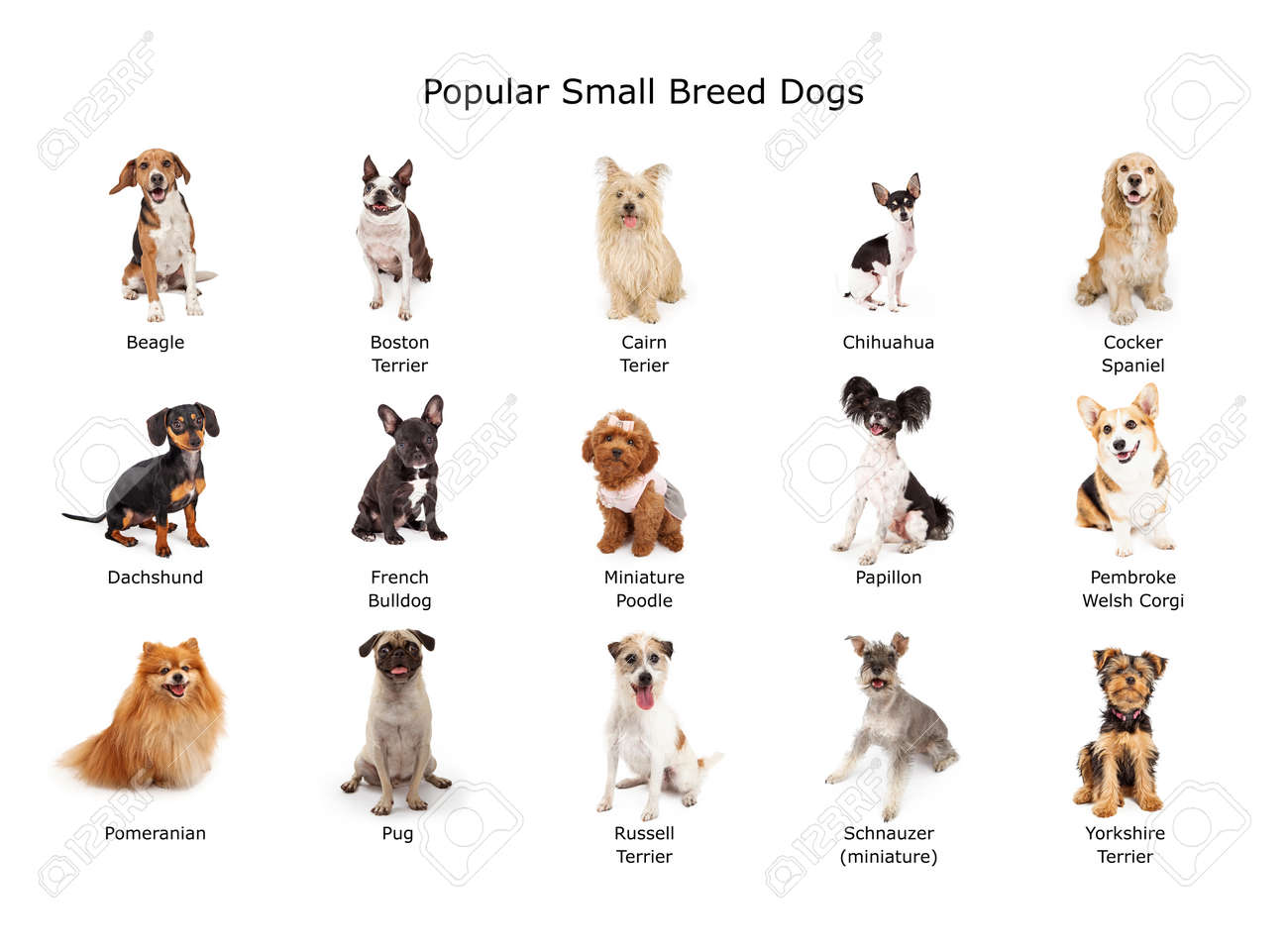 Un Grupo De Quince Raza Pequeña Común Perros Domésticos Fotos