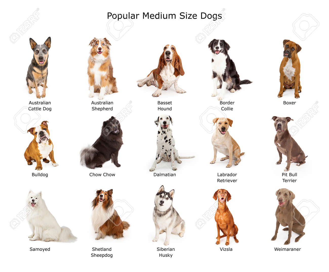dog stock photos royalty free dog images and pictures