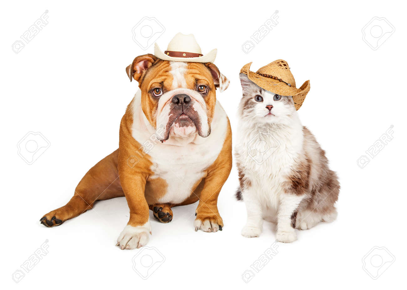 Funny Photo Of An English Bulldog Breed Dog And A Cat Wearing