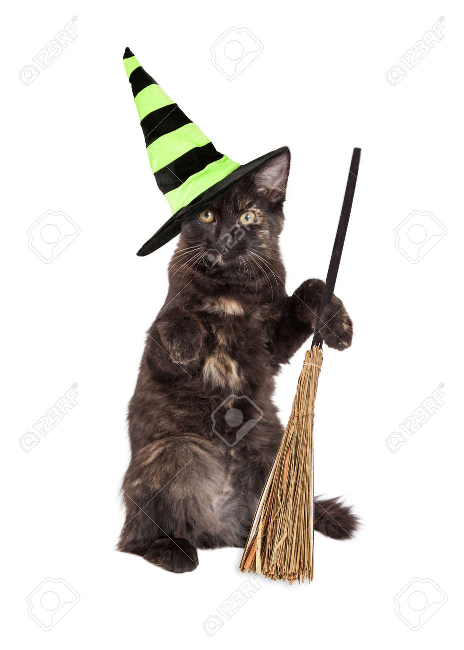 Cute little black kitten wearing a Halloween witch hat and sitting up holding a broom - 44380346