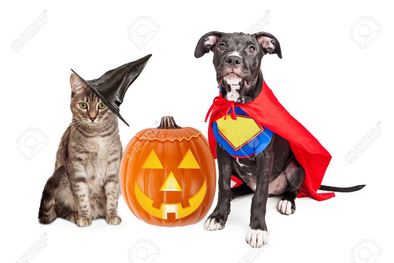 Cute Cat Dressed As A Witch And Dog Wearing Super Hero Costume ...