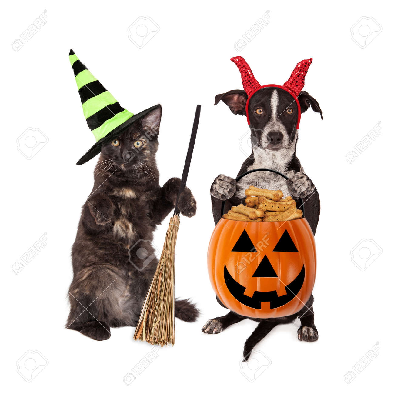 Cute black kitten and puppy dressed in Halloween costumes holding pumpkin filled with dog treats Stock  sc 1 st  123RF.com & Cute Black Kitten And Puppy Dressed In Halloween Costumes Holding ...