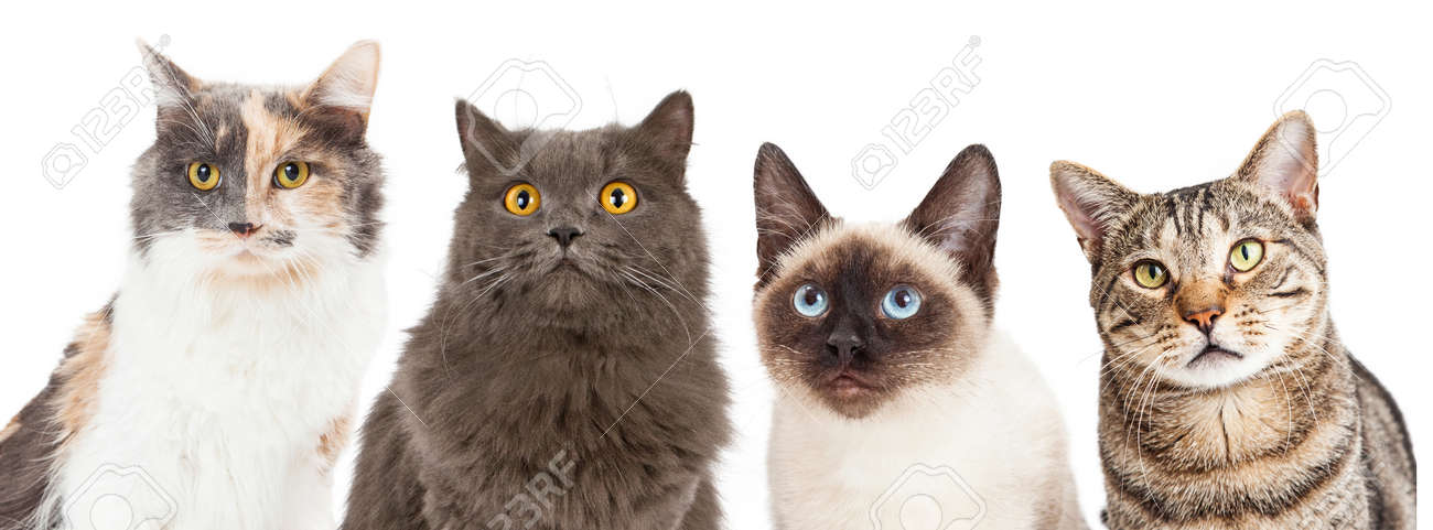 Close-up image of four different breed cats looking forward at the camera - 45138604
