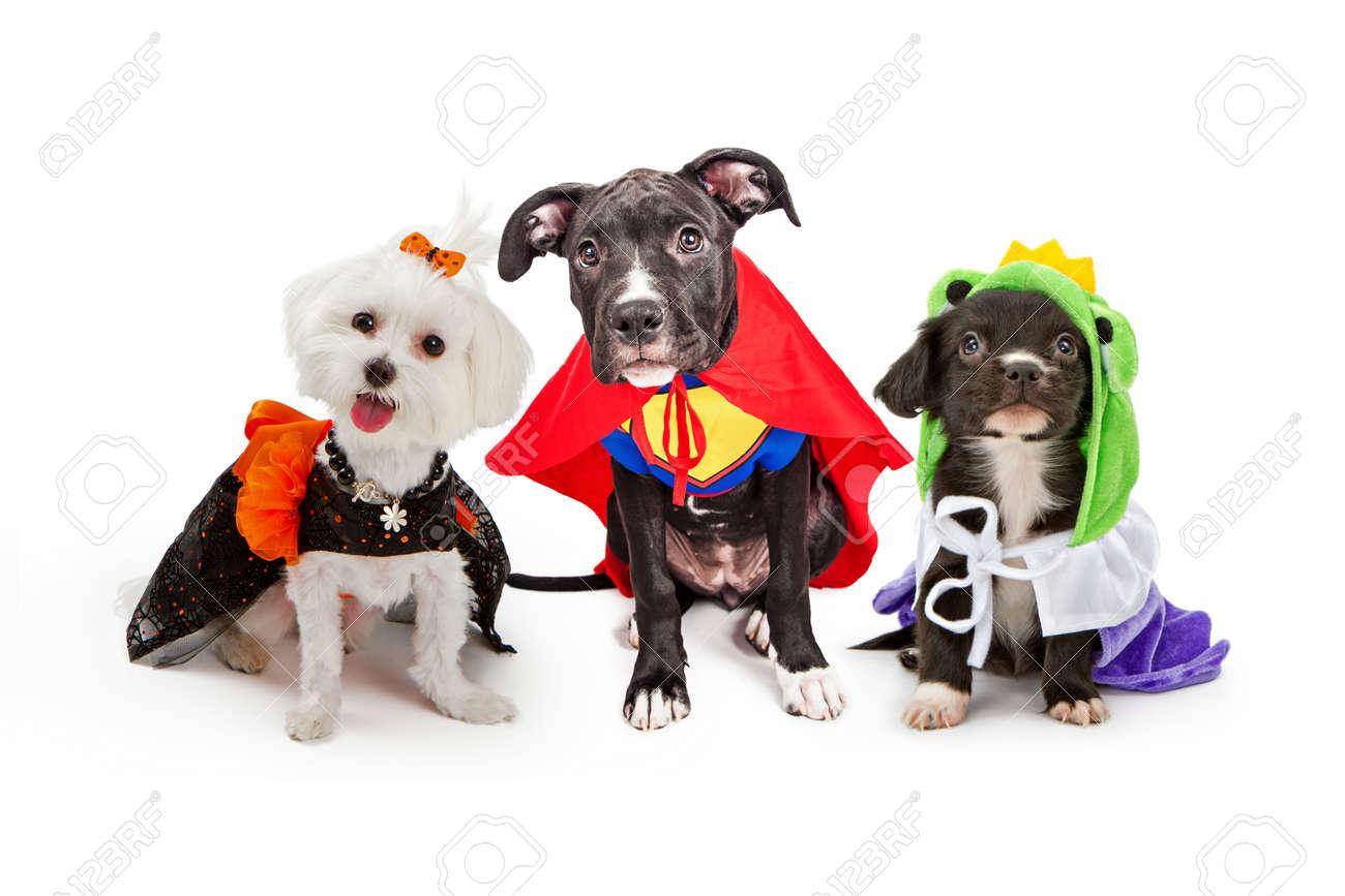 Drei Niedliche Kleine Welpen Hunde In Halloween Kostumen Die Eine