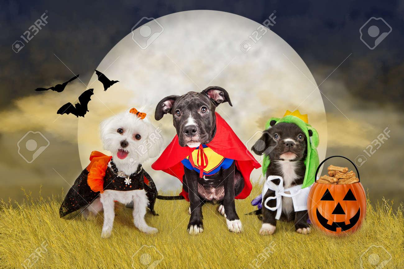 halloween dog stock photos. royalty free halloween dog images