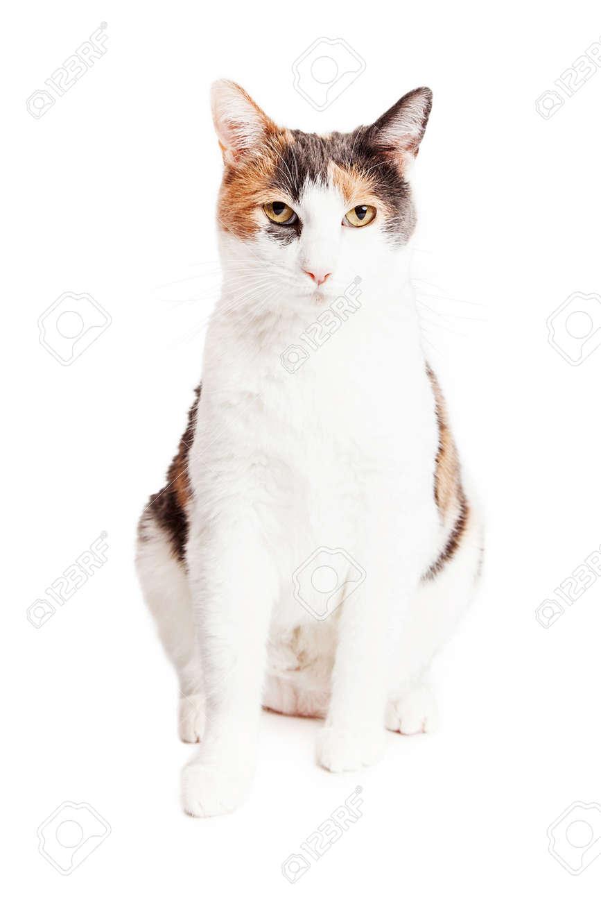 Eine Hübsche Katze Mit Grau, Braun Und Weiß Farbe Fell Sitzen In Weiß  Standard