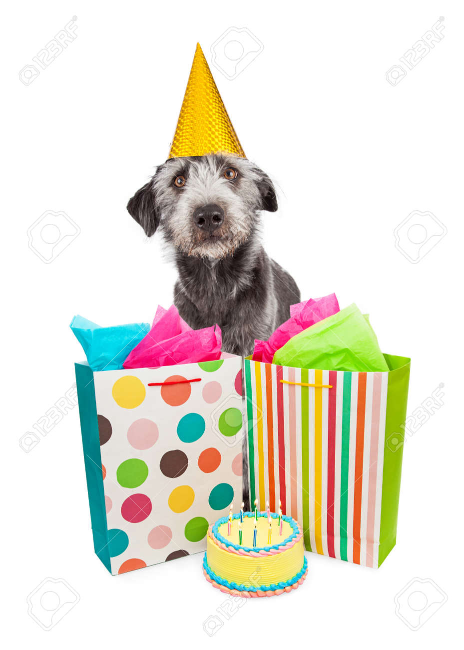 Funny Photo Of A Dog Wearing Birthday Party Hat With Presents And Cake Stock