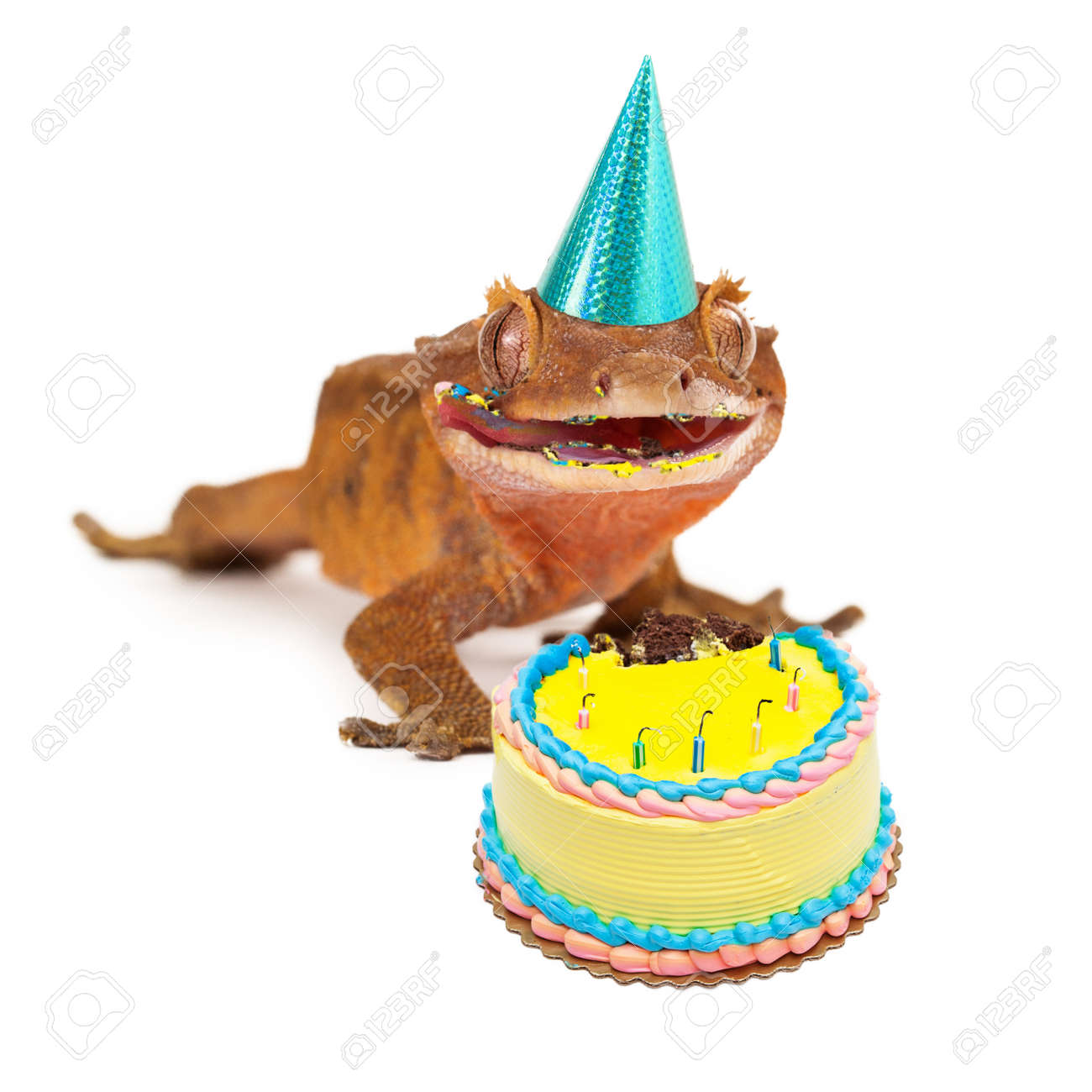 A Funny Crested Gecko Wearing Birthday Party Hat With Messy Face From Eating Cake