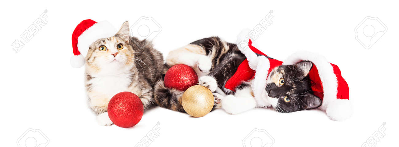 Stock Photo - Two cute baby kittens wearing Christmas Santa Claus outfits  laying down together playing with tree ornaments - Two Cute Baby Kittens Wearing Christmas Santa Claus Outfits Laying