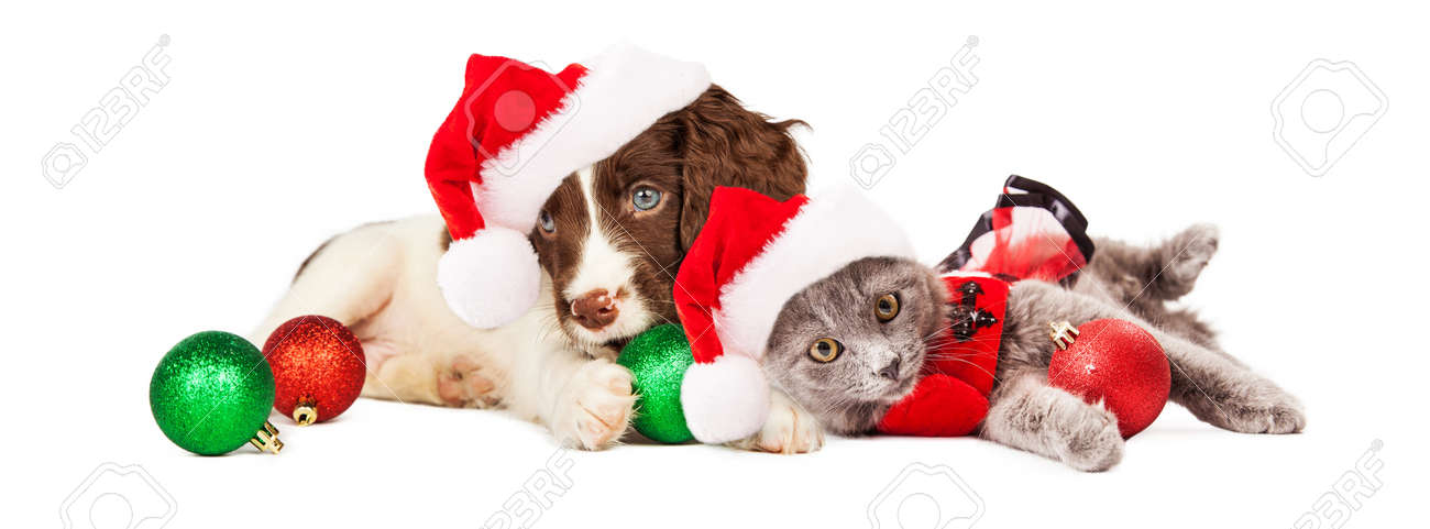 Cute little puppy and kitten wearing Christmas outfits and Santa Claus hats  laying together Stock Photo - Cute Little Puppy And Kitten Wearing Christmas Outfits And Santa