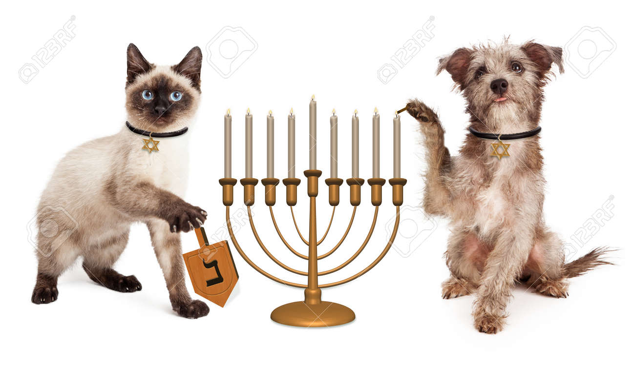 Cute puppy dog lighting a menorah candelabrum and a kitten spinning a wooden dreidel in celebration of the Jewish Hanukkah holiday - 50596670
