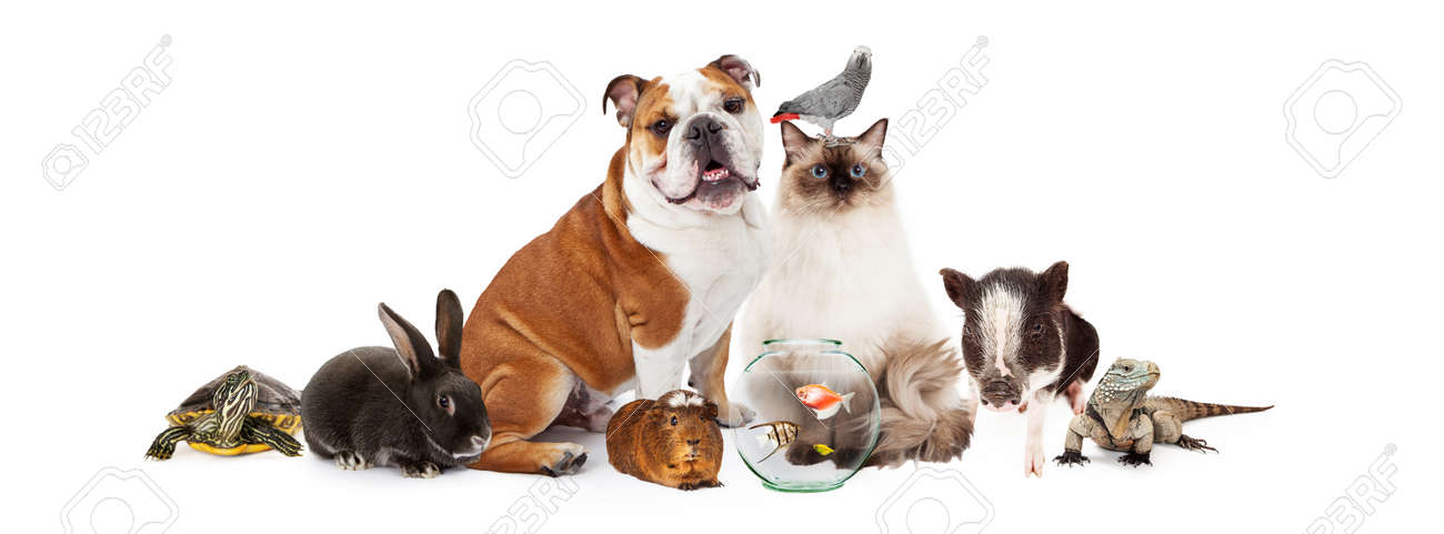 Row of popular domestic pets together over white - 50651391