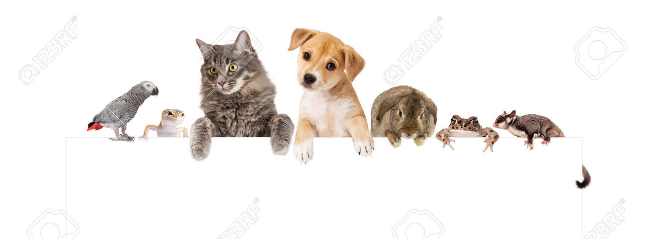 Row of domestic pets hanging over a blank white banner. Image sized to fit a popular social media banner photo placeholder. - 50651545