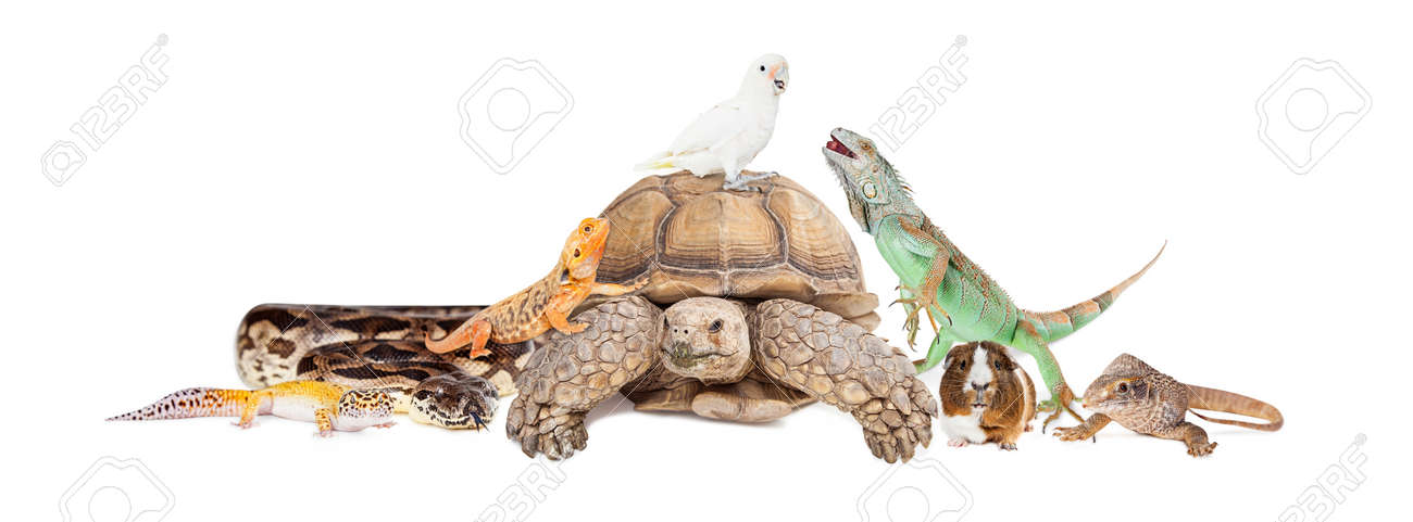 Group of exotic pets sitting together and interacting over white - 51792670