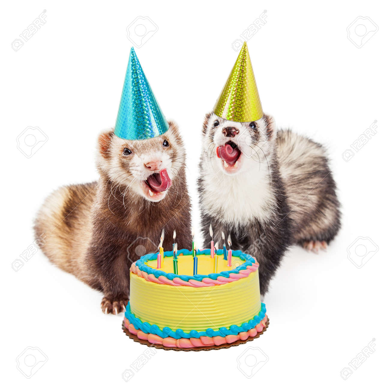 Two Funny Ferrets With Birthday Hats And Cake Mouths Open